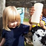 An image of two toddlers bottle feeding a lamb at Acton Scott Historic Working Farm. Acton Scott Historic Working Farm enjoyed record visitor numbers of the Easter holiday weekend in 2019.