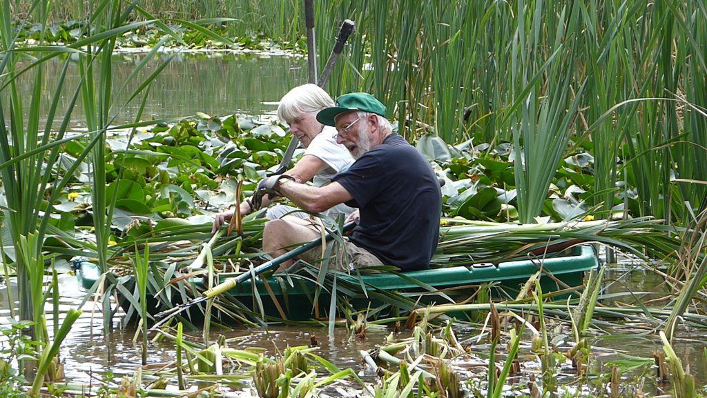 An image of volunteers working on a pond at Severn Valley Country Park while volunteering.
