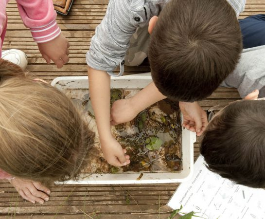 An image of children learning about mini woodland beasts such as slugs and snails at Severn Valley Country Park.