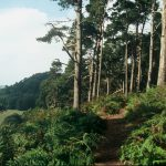An image of the woodland at Corbet Wood where a tree planting event is to take place on 30 November.